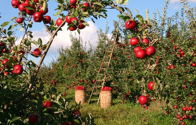 Best Apple and Pumpkin Picking Farms Near NYC